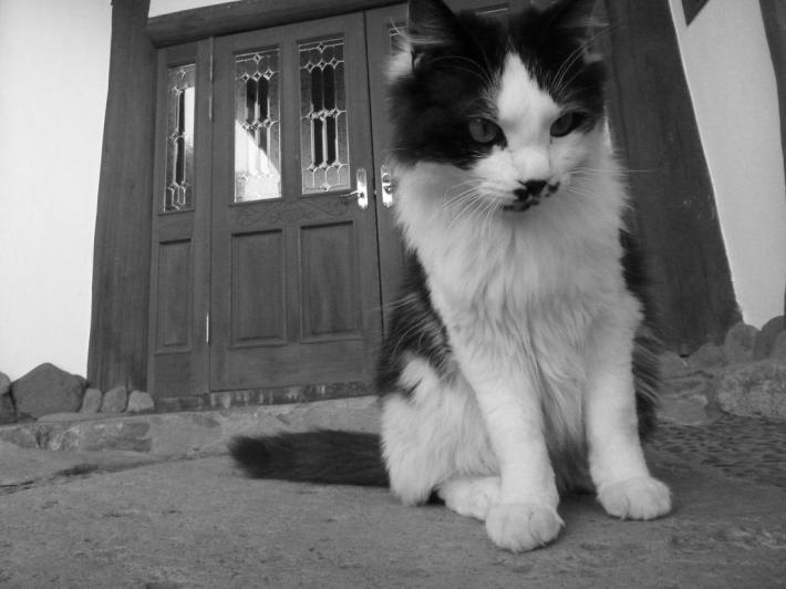 猫スタッフがお待ちしてます