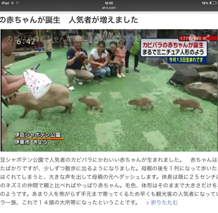 静岡新聞 動画ニュース 8月20日 『カピバラの赤ちゃんが誕生』