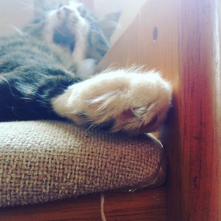 隠れて眠るダヤンさま
