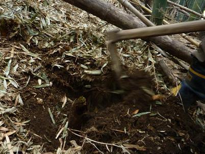 20140414 竹林 掘る.JPG