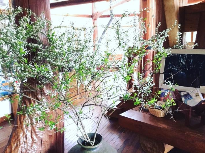 3月のオーナーの今日の生け花 ユキヤナギ
