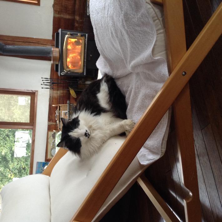 猫スタッフ コルテス 3月