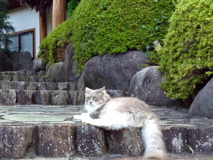 お客様が来るのを待っている猫女将のジョアンです